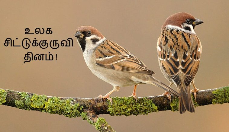 World sparrow day-March 20