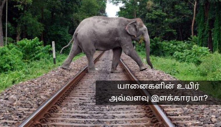 Elephant killed in train accident!